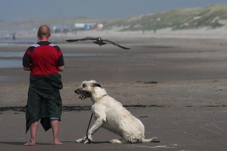 Valkenier op het strand....