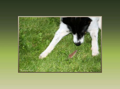 Veldmuis leert hond wijze les