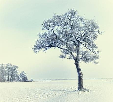 sneeuw boom