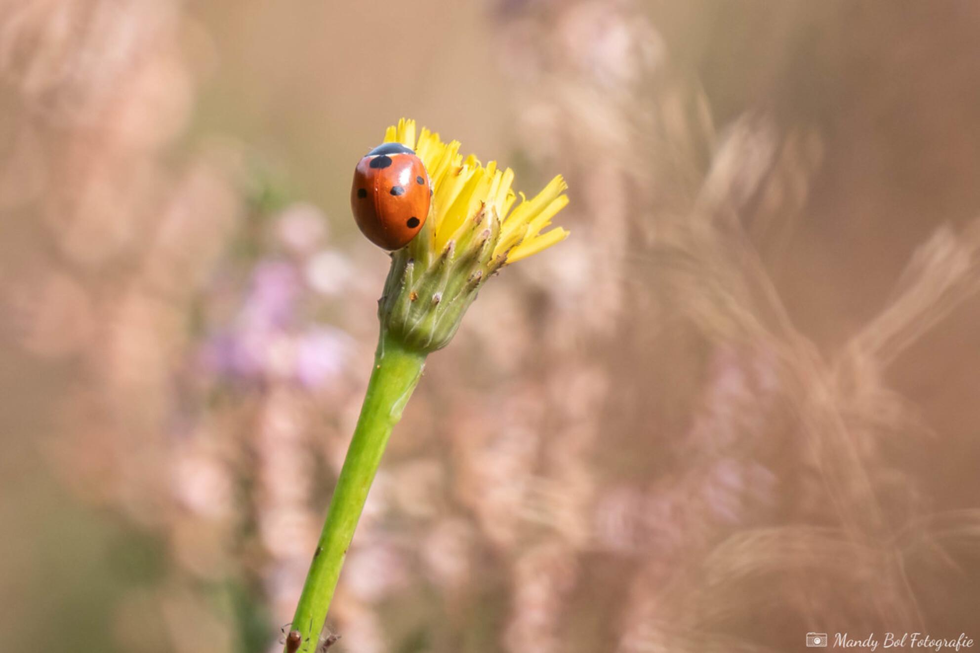 Welkom Lente - Het is nog maar februari, maar het voelt al als Lente! - foto door MandyBolFotografie op 24-02-2021 - deze foto bevat: macro, zon, bloem, natuur, lieveheersbeestje, geel, licht, tuin, bokeh - Deze foto mag gebruikt worden in een Zoom.nl publicatie