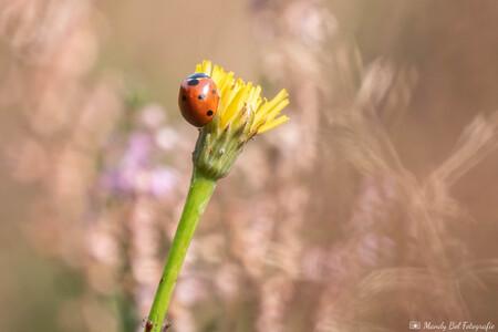 Welkom Lente - Het is nog maar februari, maar het voelt al als Lente! - foto door MandyBolFotografie op 24-02-2021 - deze foto bevat: macro, zon, bloem, natuur, lieveheersbeestje, geel, licht, tuin, bokeh