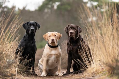 Drie musketiers