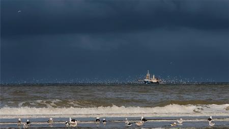 Meeuwen genoeg! - Katwijk aan Zee Kotter IJM 8 - foto door Jan Zuijderduijn op 19-10-2015