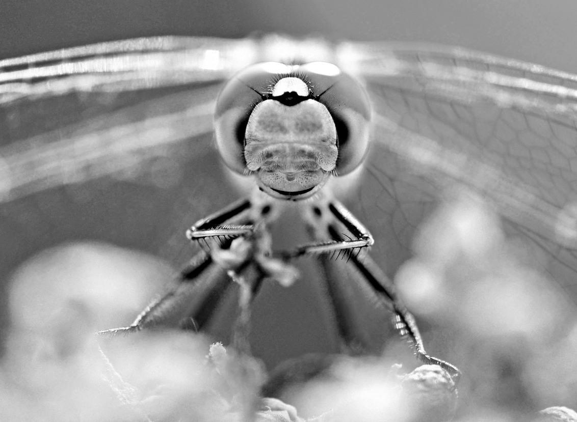 libel op een wolk - Libelle op een wolk;) - foto door MaJaTa op 27-10-2020 - deze foto bevat: macro, bloem, lente, natuur, licht, tuin, libel, insecten, oog, zomer, insect, ogen