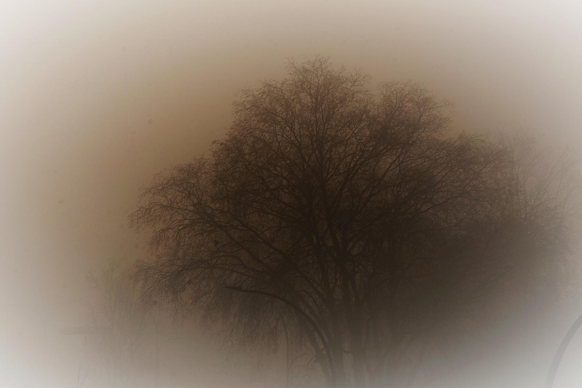 DSC_1479 Mist. - Vanmorgen geen steek te zien. - foto door edu-1 op 28-02-2021 - deze foto bevat: mist