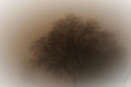 DSC_1479 Mist.