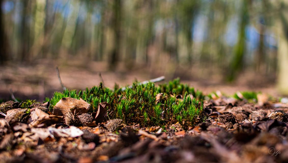Mos in het bos - Languit op de gond met de 35mm 1.8 heerlijk dat afstekende groen op een bruine achtergrond - foto door sjefkuh op 03-04-2021