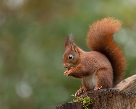 Knabbelend eekhoorntje