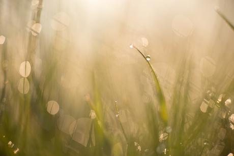 gg (gewoon gras
