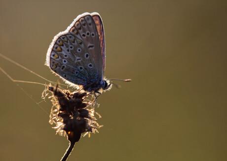 Vlinder met tegenlicht.