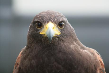 Kijk eens naar het vogeltje.....