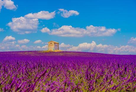 huis in lavendelveld
