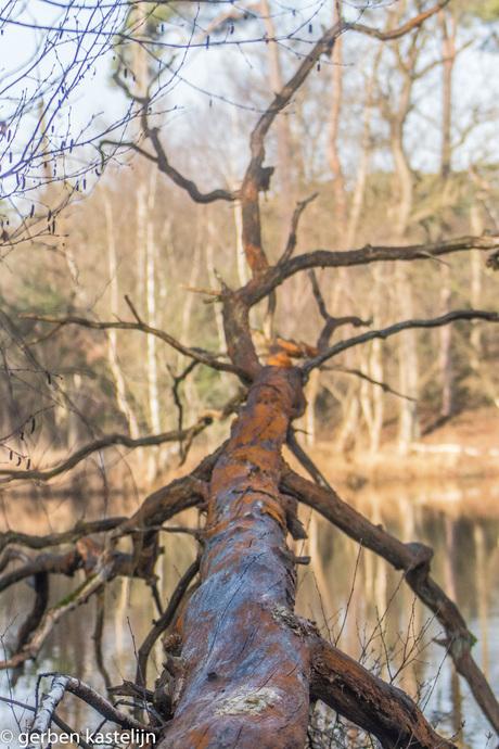 omgevallen boom in het een bosven