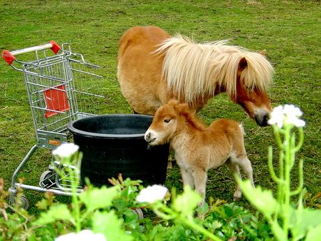 paard en winkelwagen