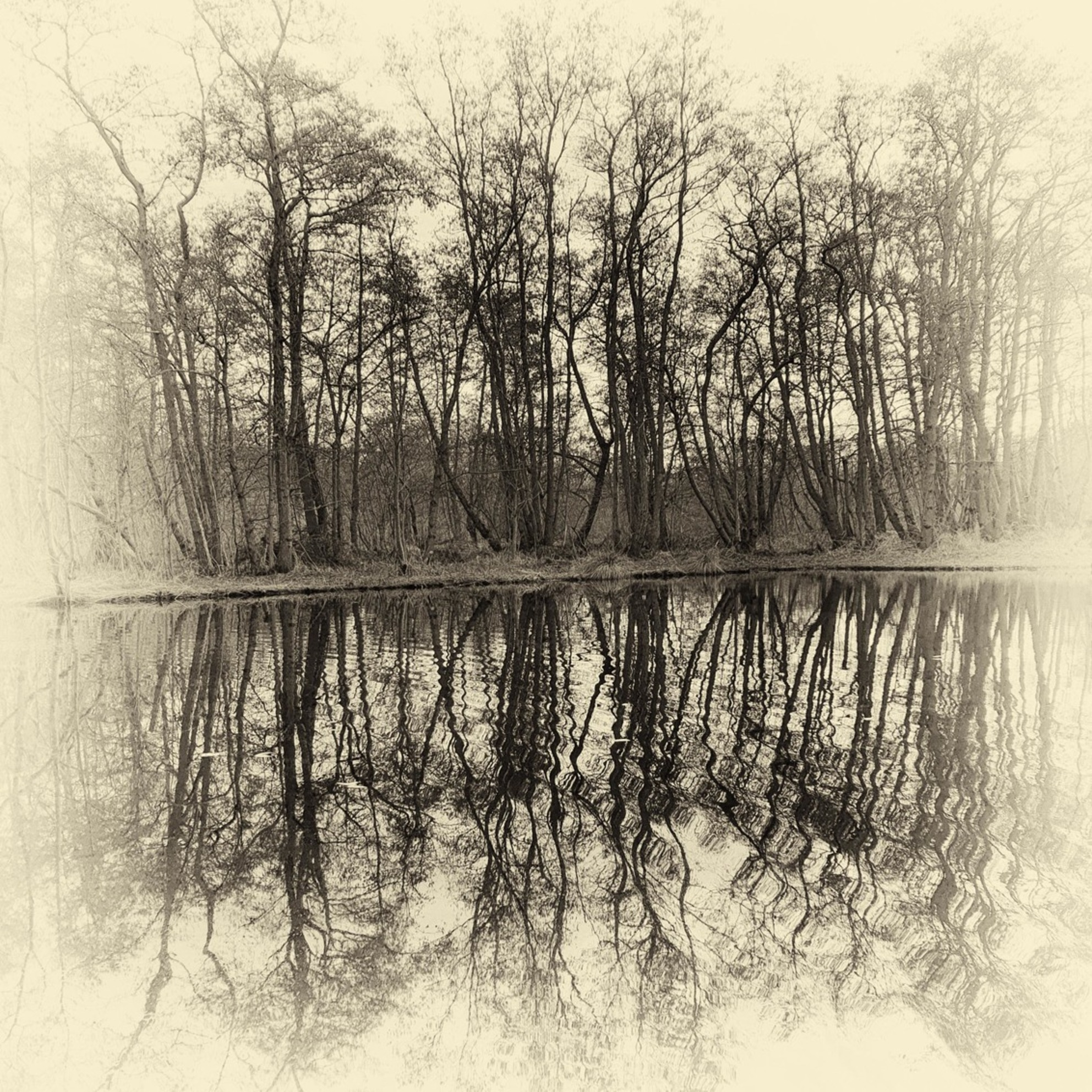 Bewerkt - Foto is bewerkt in Photoshop met NIK software Silver Efex Pro 2.0. Gekozen voor Antique plate en Kodak 400 T max.  Feedback op compositie en uitvoe - foto door lang op 27-02-2021 - deze foto bevat: natuur, landschap, schilderij, bewerking, sepia, photoshop, nik, bewerkingsuitdaging