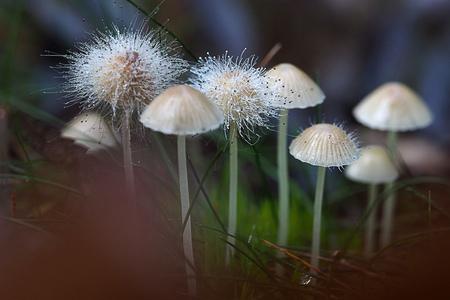 Het einde van paddenstoelen - Op zoek naar de kleine paddenstoelen, kwam ik ineens deze beauty's tegen. - foto door Lathyrus op 28-10-2015 - deze foto bevat: herfst, paddenstoel, bos, schimmel