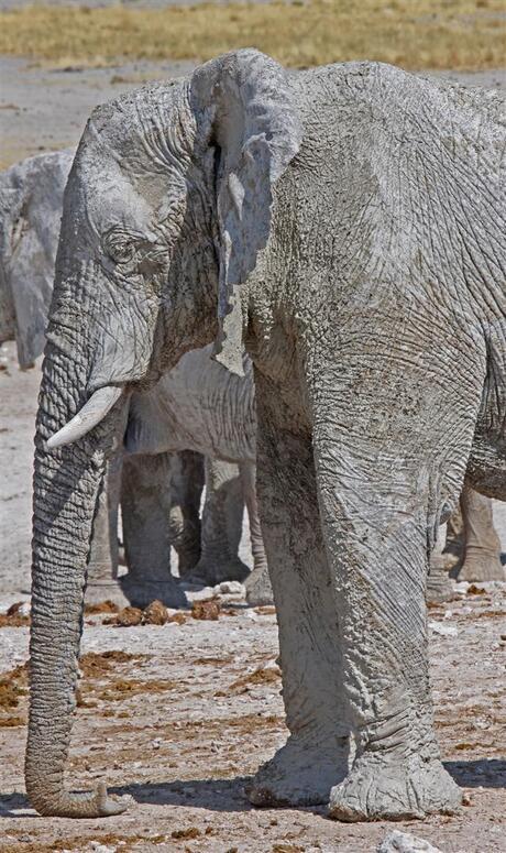 toen blies een olifant