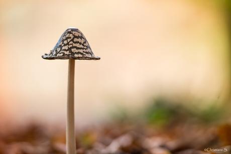 Kijk naar mijn mooie hoed!