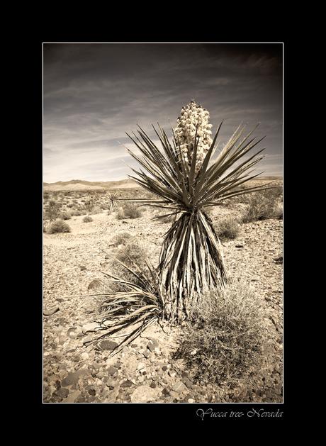 BW desert 5