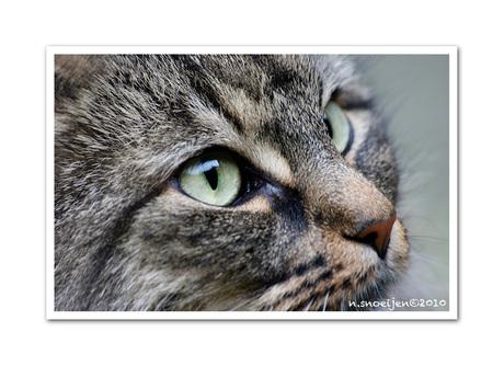 Close Up Kattekop