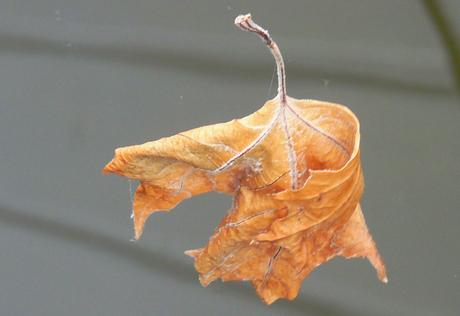 Vast aan een draad van een spinnenweb warrelend in de wind.