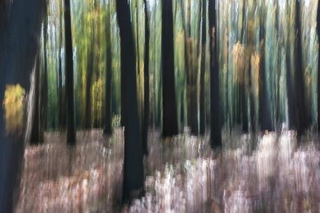 Zwarte bomen bos