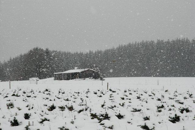 Dit mag vanaf nu wel eens ..... - Ardennen - foto door GEERTSTERN op 29-11-2009 - deze foto bevat: sneeuw