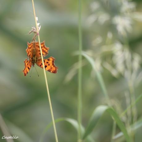 Vlinder02
