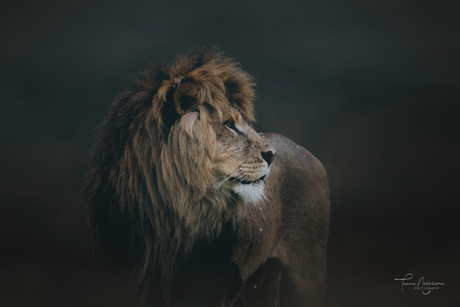 ©Tamara NederkoornPhotography