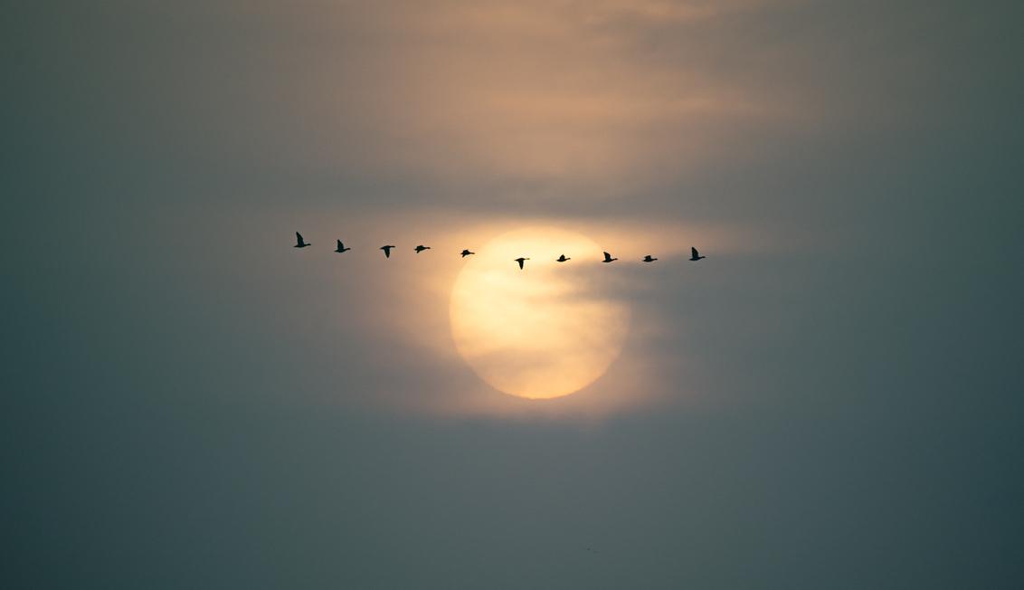 Vogelvlucht - Afgelopen maandag ochtend was ik bij de Oostvaardersplassen. Er was een fletse zon omdat er zoveel Sahara zand in de atmosfeer was. Gewacht totdat er - foto door reinder.tasma op 25-02-2021 - deze foto bevat: zon, vogel, oostvaardersplassen