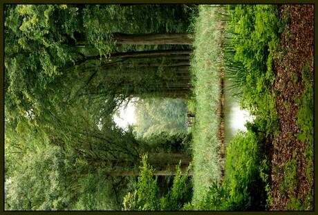 In het bos 3