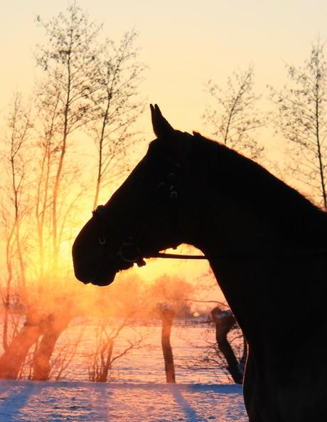 Koude zonsondergang