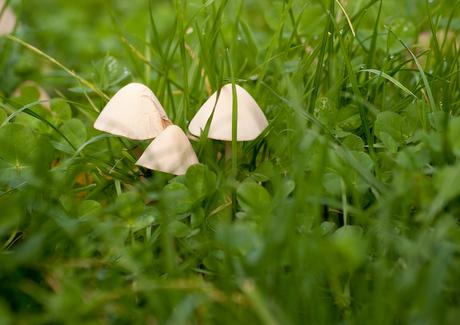 verstopt tussen het gras