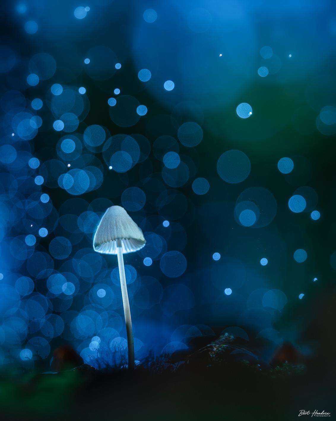 Confetti - Paddestoel gefotografeerd met flits en het effect gekregen door een plantenspuit te gebruiken en de witbalans te veranderen - foto door barthendrix op 12-11-2020 - deze foto bevat: macro, blauw, natuur, licht, paddestoel, herfst, bos, flits, waterdruppels