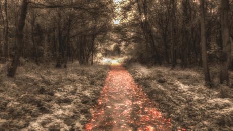 Het gouden pad
