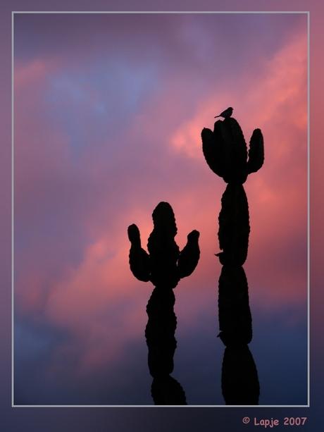 Papa en Mama cactus met vogeltje