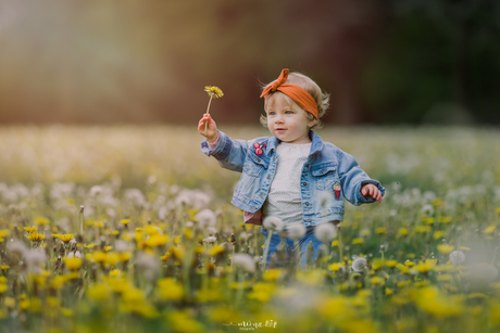 Dandelion wishes and lioness dreams