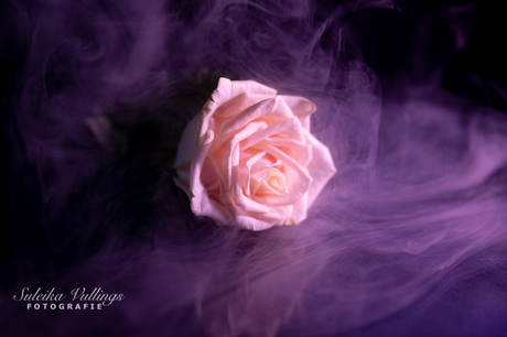 Colourfull flowers - 07 februari 2021 -00021