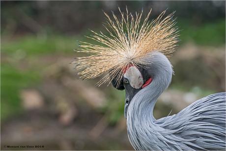 Kraanvogel 2