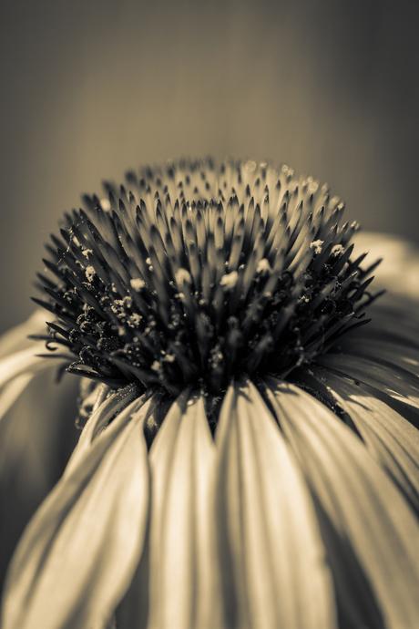 Zomaar een plantje in zw