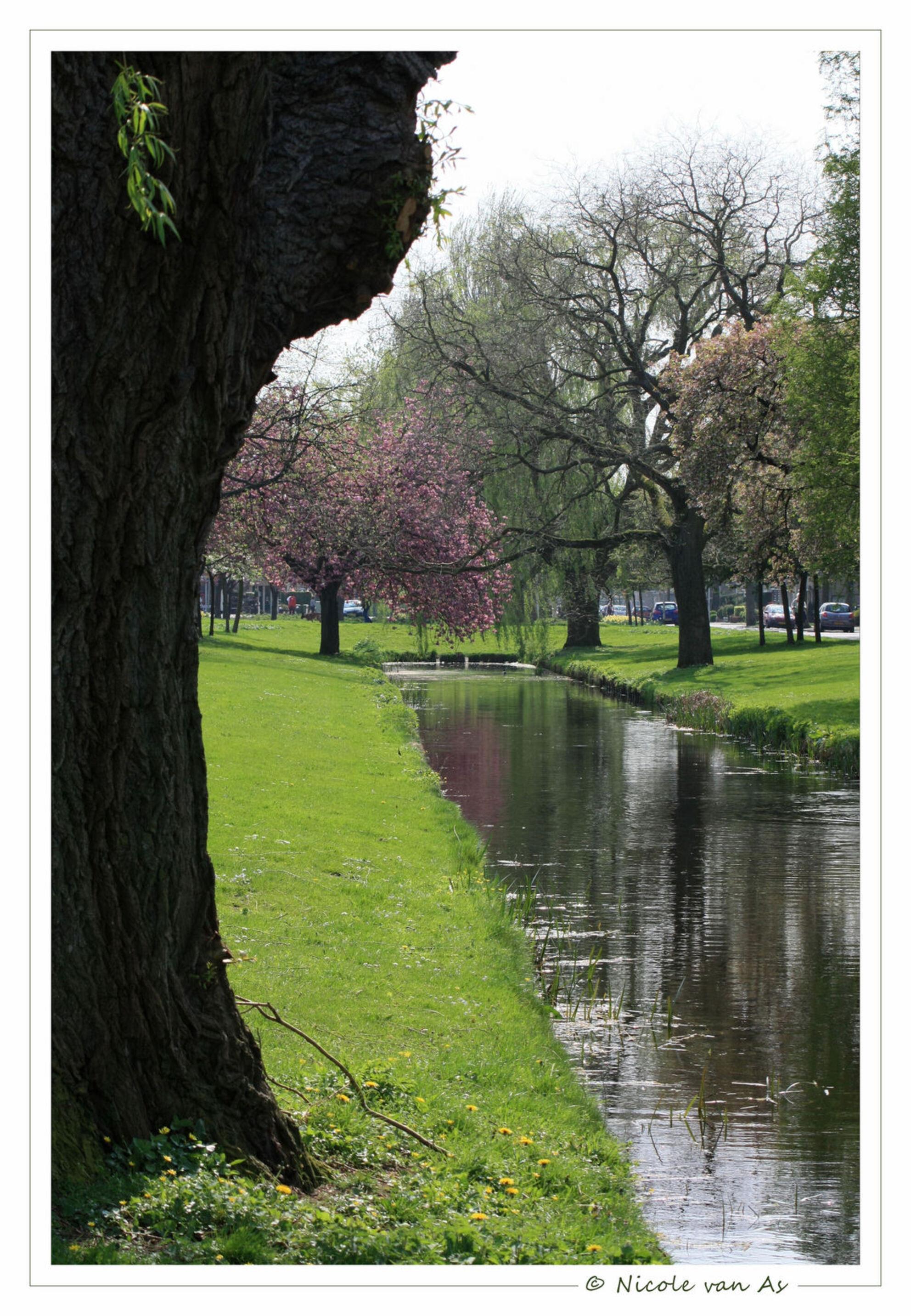 Voorjaar met veel kleuren. - In de herfst is de natuur bruin, Blaadje vallen van de boom.  In de winter is de natuur kaal, Sneeuwvlokjes vallen omlaag.  In de lente is de n - foto door nicole-8 op 16-04-2009 - deze foto bevat: kleuren, lente, natuur, bloemen, voorjaar, sloot, canon, bloesem, nivas, eos450d