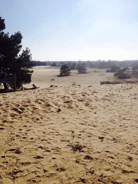 woestijn op de veluwe