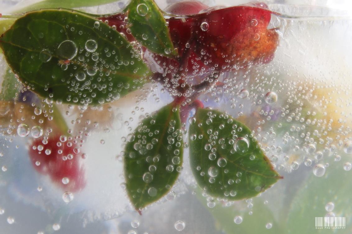 Bubbels - - - foto door susannekim op 19-07-2020 - deze foto bevat: plant, water, bubbels, macrofotografie, bergthee