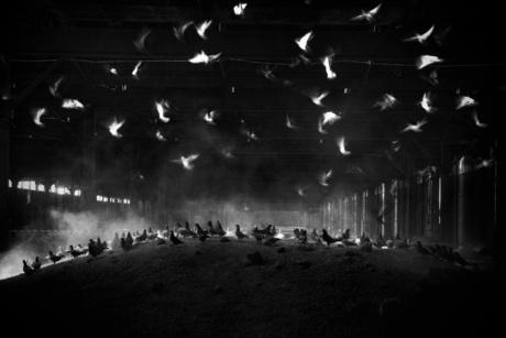 Birds in (slow) motion...
