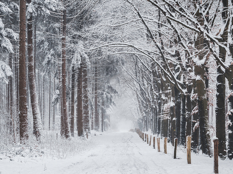 Mastbos Breda in de sneeuw