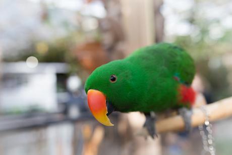 Pretty bird @ 35mm