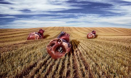 . . . Harvest Life . . .