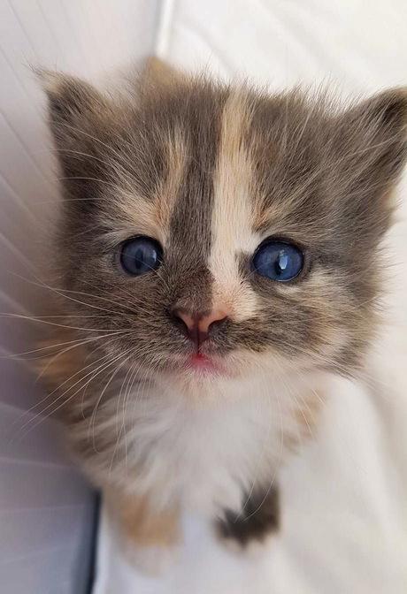 Kleine Marlie