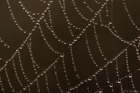 Spinnenweb - - - foto door drbob250_zoom op 13-12-2016 - deze foto bevat: macro, natuur, spin, druppel, licht, tegenlicht, dauw, bokeh