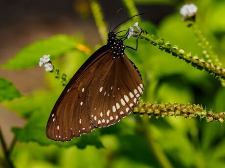 Wildlands vlindertuin